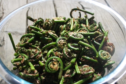 Cleaned Fiddleheads