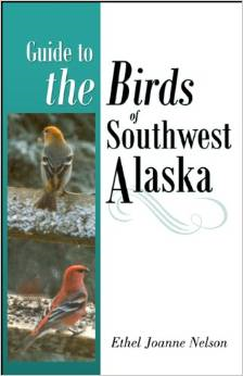 bird of southwest