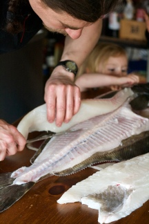 Halibut filleting